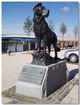 statue of bamse in montrose